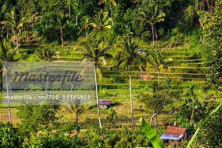 Overview of Rice Terraces, Jatiluwih, Bali, Indonesia