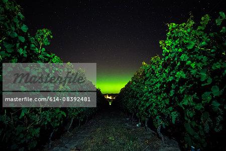 Vineyard at night, Naramata Bench, British Columbia, Canada
