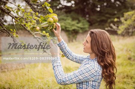 Farmer woman touching apple
