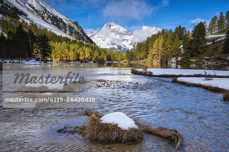 Colorful trees and snowy peaks frame Lai da Palpuogna, Albula Pass, Bergen, Engadine, Canton of Graubunden, Switzerland, Europe