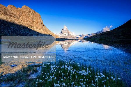 Cotton grass frame the Matterhorn reflected in Lake Stellisee at dawn, Zermatt, Canton of Valais, Swiss Alps, Switzerland, Europe