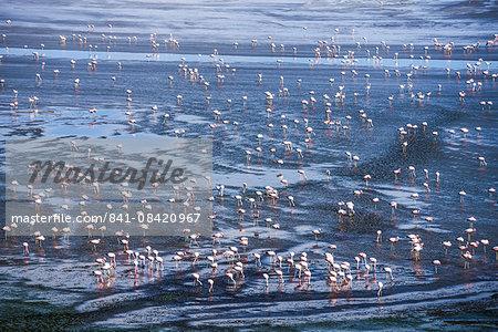Thousands of flamingos at Laguna Colorada, a salt lake in the Altiplano of Bolivia in Eduardo Avaroa Andean Fauna National Reserve, Bolivia, South America