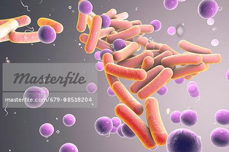 Illustration of rod-shaped and spherical (cocci) bacteria. Rod-shaped bacteria include Escherichia coli, Salmonella, Shigella, Legionella, Mycobacterium and Klebsiella species. Spherical bacteria include Staphylococci, Streptococci species.