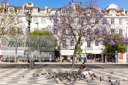 Pigeons being fed beneath a Jacaranda tree at Praca Dom Pedro IV, (Rossio), Downtwon, Lisbon, Portugal