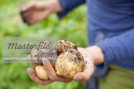 Details of family organic harvest
