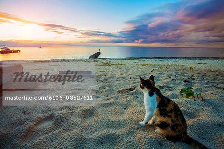 Cat sitting on a beach.