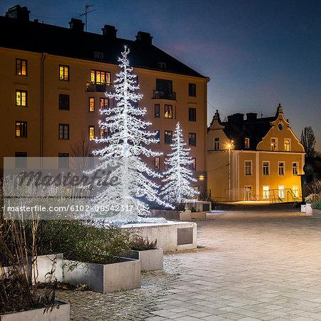 Christmas trees illuminated at dusk