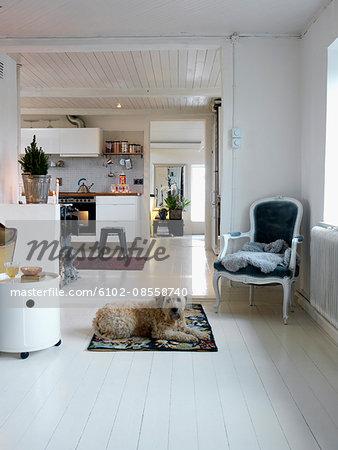 Dog in living room