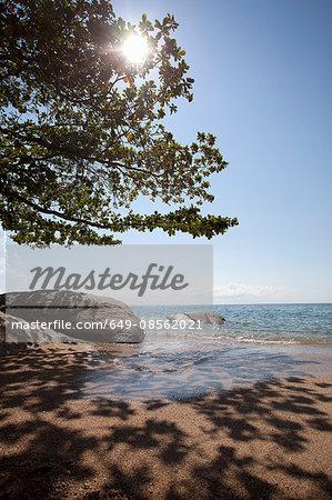 Tree over tropical beach
