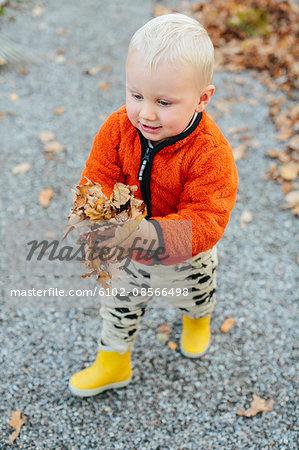 Boy carrying fallen leaves