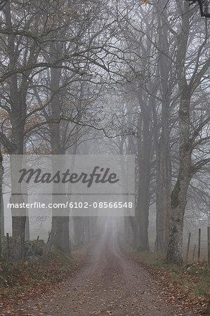 Treelined road in fog
