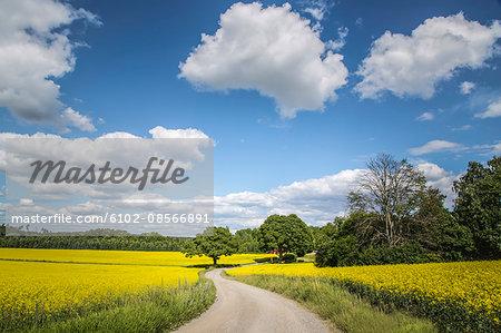 Dirt track through flowering fields