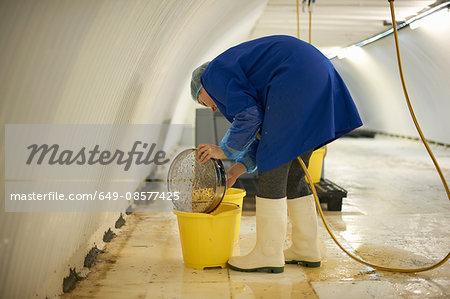 Female worker cleaning equipment in underground tunnel nursery, London, UK