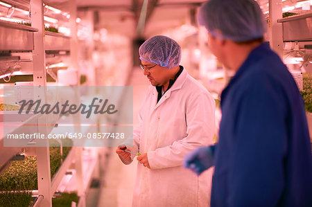 Workers talking in micro green underground tunnel nursery, London, UK