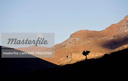 Silhouette of tree on rural hillside