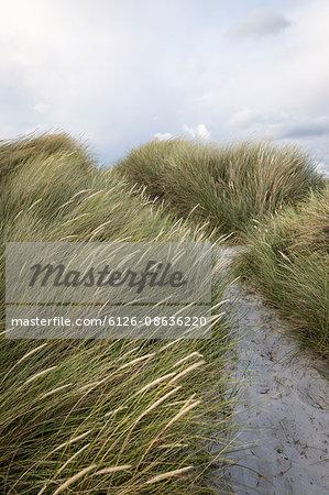 Sweden, Skane, Skanor, Close-up of grass on sandy beach