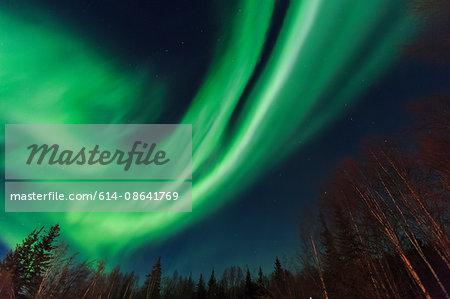 Aurora borealis, Northern Lights near Chena Resort, near Fairbanks, Alaska