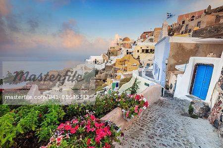 Bougainvillea flowers and typical houses on the Aegean Sea at sunrise, Oia, Santorini,  Cyclades, Greek Islands, Greece, Europe