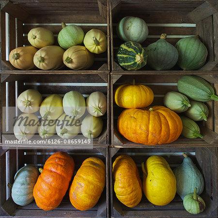 Sweden, Skane, Vanga, Pumpkins in wooden boxes
