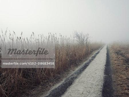 Dirt road through meadow