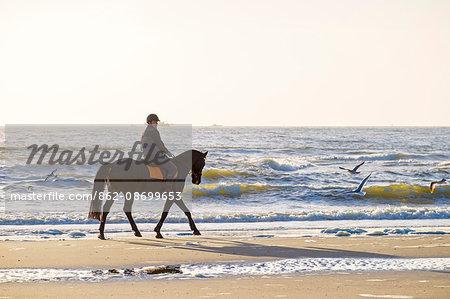 Netherlands, North Holland, Julianadorp. Man riding a horse on the beach along the ocean.
