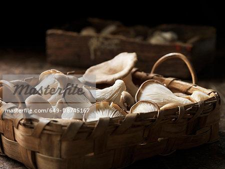 Fresh oyster mushrooms in basket