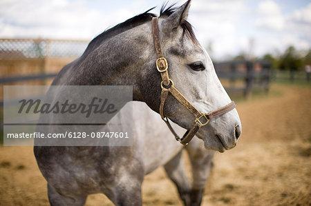 Horse standing in pen