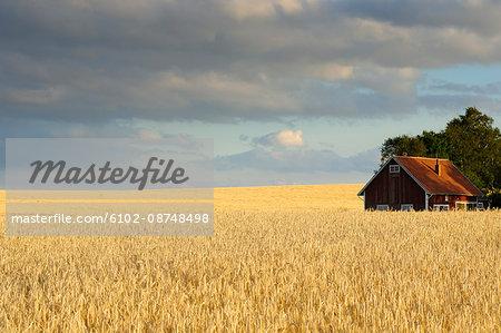 View of barn in field