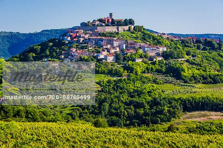 Fertile farmland in front of the medieval, hilltop town of Motovun in Istria, Croatia