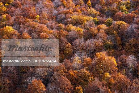 Overview of autumn foliage in Abruzzo National Park, Abruzzo, Italy
