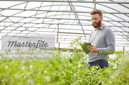 Man in polytunnel using digital tablet