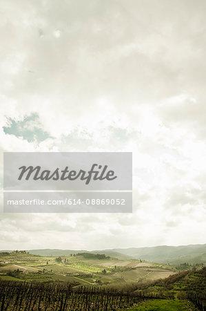 Empty vineyard under cloudy sky