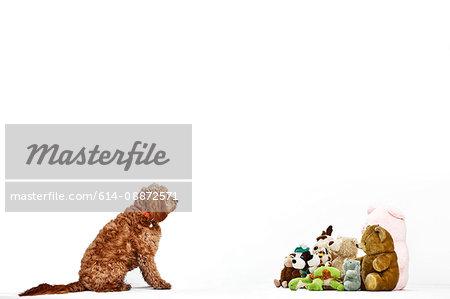Dog facing soft toys