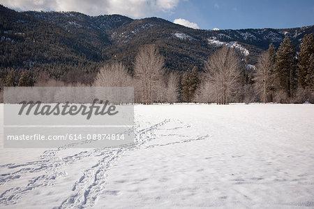 Tracks in snow, Mazama, Washington, USA