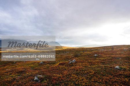 Rocks on meadow