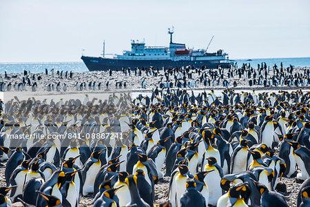 Giant king penguin (Aptenodytes patagonicus) colony and a cruise ship, Salisbury Plain, South Georgia, Antarctica, Polar Regions