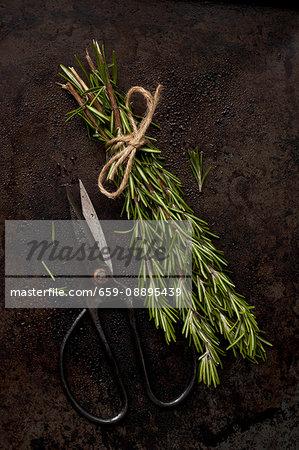 A Bundle of Fresh Rosemary