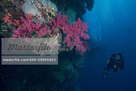 Scuba diver by coral, Red Sea, Marsa Alam, Egypt
