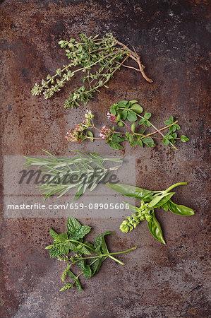 Fresh herb sprigs: thyme, oregano, rosemary, basil and mint