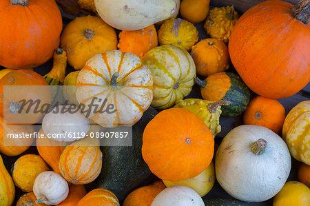 Assorted autumn vegetables, squashes and pumpkins, Derbyshire, England, United Kingdom, Europe