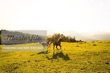 Horses in Hokkaido
