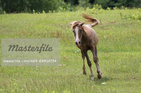 Running horse in pastureland