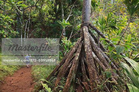 Man on Kalalau Trail Hike, Na Pali Coast, Kauai, Hawaii with prop roots of a Hala tree, Screwpine or Pandanus tectorius.