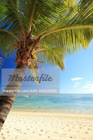 Beach with palm tree, Mauritius