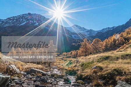 The sun over larch forest in Swiss Alps, Bettmeralp, Valais, Switzerland