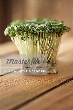 Still life close up fresh, organic, healthy green kaiware daikon sprouts bunch