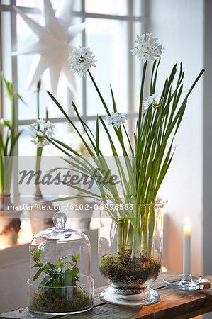 Flowers in glass pot