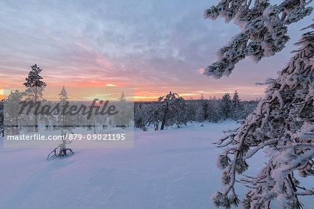 The last lights of the arctic sunset on the snowy woods Vennivaara Rovaniemi Lapland region Finland Europe
