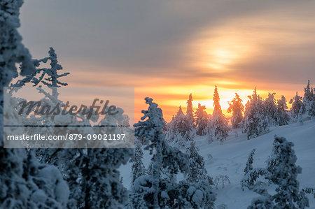 The arctic sunrise lights up the snowy woods shrouded in morning mist Ruka Kuusamo Ostrobothnia region Lapland Finland Europe