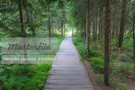 Boardwalk at Lake Grosser Arbersee in Bayerisch Eisenstein in the Bavarian Forest in Bavaria, Germany
